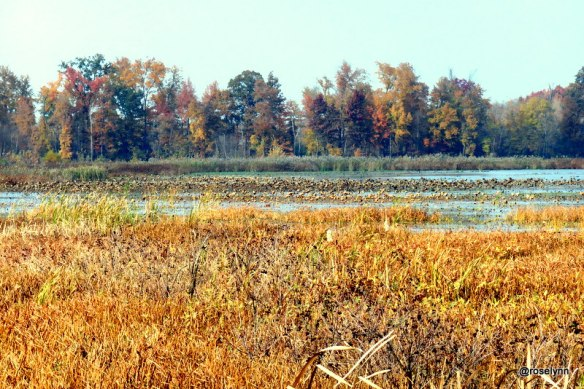 Snakey Point Marsh